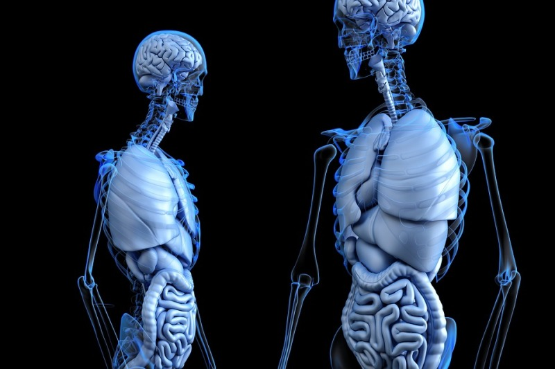 anatomical-2261006_960_720