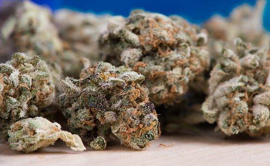 cannabis-2150543__340.jpg